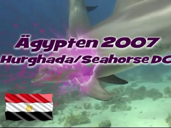 Delfine in Ägypten | Red Sea Diving | Hurghada | Erg Abu Salama | Tauchen