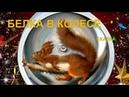 Белка в колесе | Сказка И. Семиной(Эльфика)