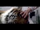 Red 7 - Heartbeat (OST Manhunter _ Охотник на людей 1986) Unofficial Videoclip