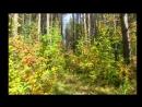 какого цвета осень в лесу Альбом_Средний