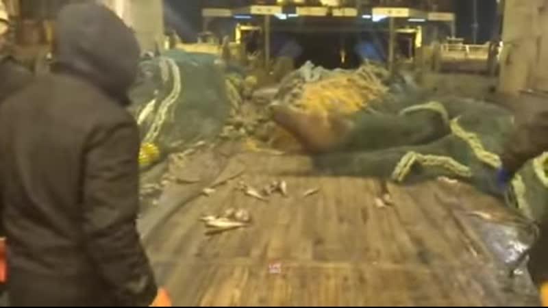 тюлень и рыбаки