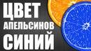 Цвет Апельсинов Синий Прикол Пародия на Филиппа Киркорова и песню Цвет Настроения Синий