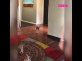 По квартире прыгают маленькие кенгуру.