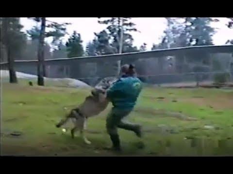 Chó sói gặp nhầm đối thủ bị tung cước chí mạng - Woman vs Wolf Best kick