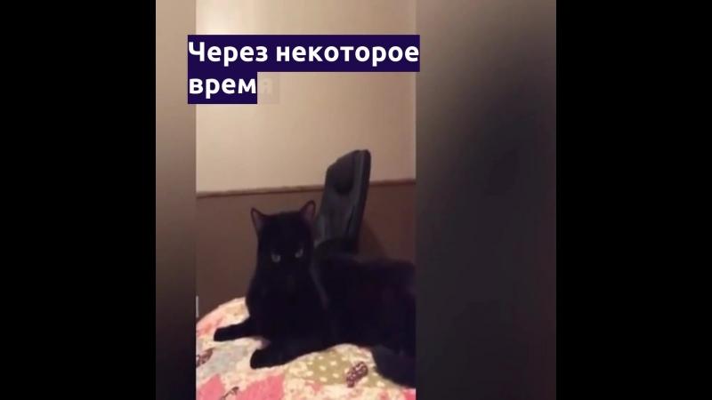 Кот вернулся к хозяйке спустя пять лет