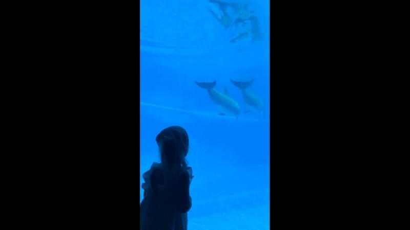 Дельфины Ахххх 🙆