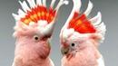 Смешные попугаи! Приколы про попугаев! Попугаи!