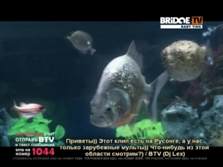 BRIDGE TV BABY TIME THE CHEMICAL BROTHERS Salmon Dance 2007