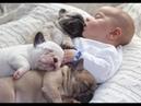 Chó Cưng Và Em Bé Dễ Thương- Cute Dog And Baby Sleeping