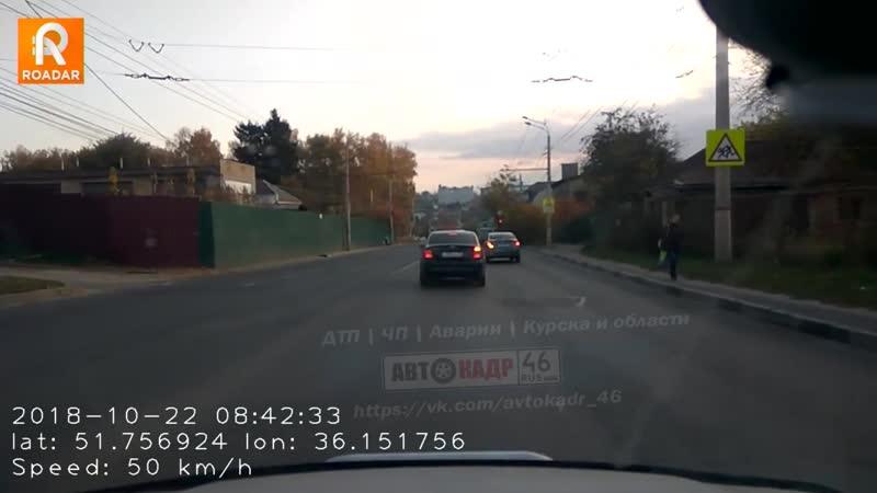 Пучковка собака на дороге дтп