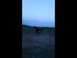 кони в яблоках, кони белые...