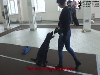 Занятие в группе (общий курс дрессировки): обучение собак выдержке. Тольятти, 23 декабря 2018.
