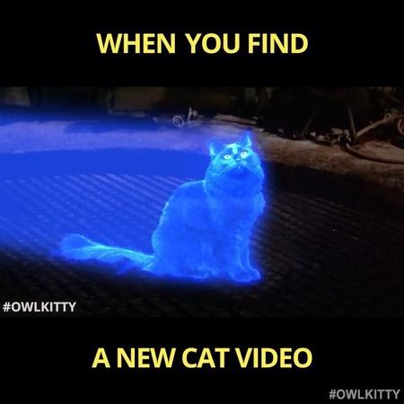 "OwlKitty on Instagram ""Help me OwlKitty you're my only hope😽starwars - - - - verifyowlkitty starwarsmemes catsofinstagram blackcat cute @ha..."
