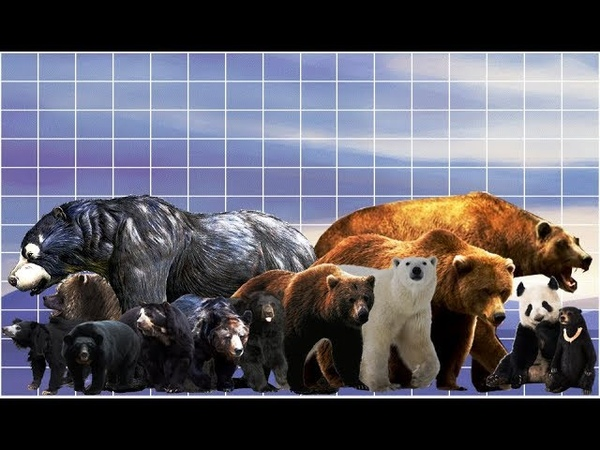 Bear size comparison | Extant and extinct species. Teddy Bears on Parade.