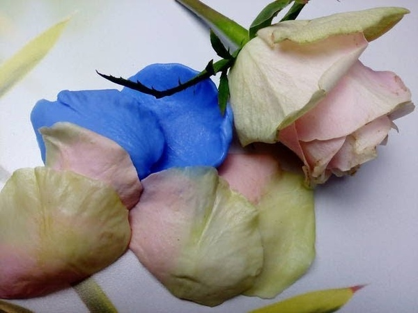 Лепесток РОЗЫ от молда до тонировки. МК от Риты.Rose petal from Molde to toning. MK from Rita