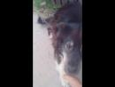 мой любимый собака Пим