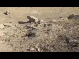 Лошадь упала и застряла между камней