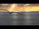 Como un pajaro libre - Vincenzo Capezzuto L'Arpeggiata / Christina Pluhar