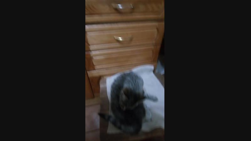 Дикенс на стуле