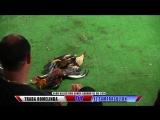 Pelea #7 TRABA ROMELINDA. Vs EL SARAMAGULLON 1606198 - Club Canca