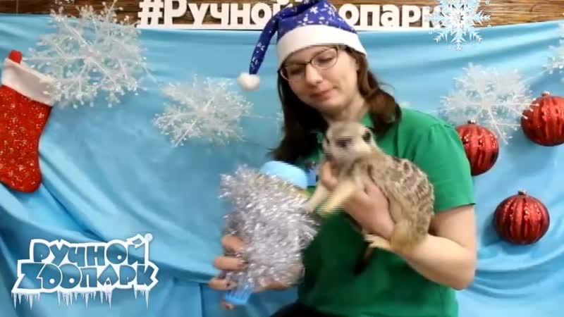 Новогодние поздравления из Ручного Zоопарка выпуск №2
