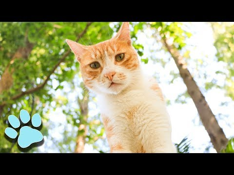 100 Sassy Cat Videos! | Funny Cats Compilation