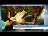 Выходные в Перми: танцевальный марафон, Собака-обнимака и Rock'N'Rollный экстрим