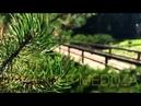 Спокойная Музыка Для Снятия Стресса АРФА - RELAXING HARP - Music - / Stress Relief Music