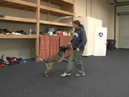 Michael Ellis and his Dog Pi Demonstrating the Heeling Exercise Find the Left