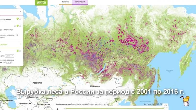 Путин сбагрил китайцам весь лес Сибири