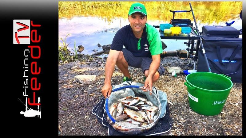 Vlog 22 Рыбалка на фидер. Ловля плотвы на малой реке. Ловля пикером в черте города 2018.