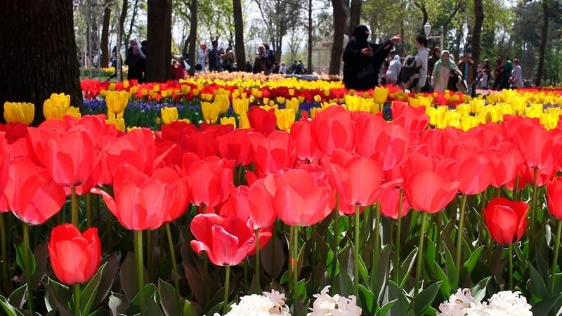 İstanbul Lale Festivali. Фестиваль тюльпанов в Стамбуле. Istanbul Tulip Festival 2018 Emirgan park