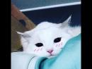 Самые милые котики memasuki about kotik