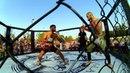 MMA Миллерово 2017 нарезка единоборства