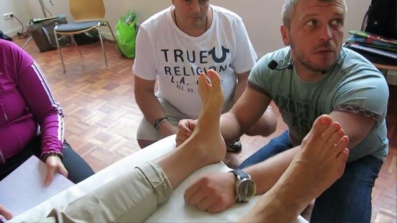 Кинезиология в Германии Крутов Строение стопы Тестирование мышц голени