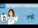 Пародонтоз у животных | Причины пародонтоза | Симптомы и лечение болезни | Советы Ветеринара