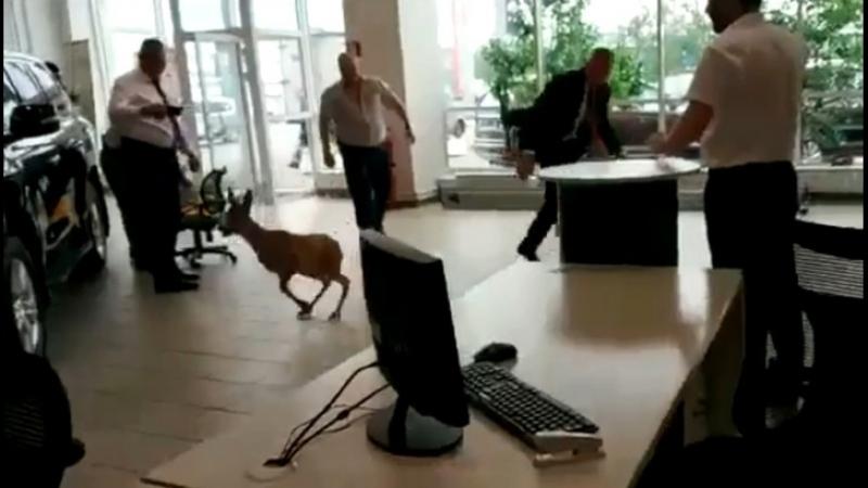 С разбега выбил стекло и убежал