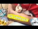 Этого котика спасла любовь!