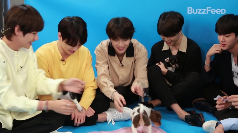 180518 BTS Plays With Puppies While Answering Fan Questions