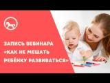 Запись вебинара «Как не мешать ребёнку развиваться»