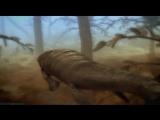 Discovery «Армагеддон животных (2). Ад на Земле» (Познавательный, природа, 2009)