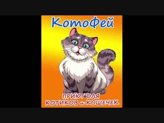 Знакомство с приютом @kotosocialpage(