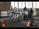 Čtyřspřeží - Videozáznam 1. kola Zimního jezdeckého poháru ČJF 2019 spřežení