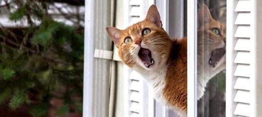 Что делать, если соседи развели в своих квартирах настоящий зверинец?