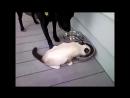 Русские приколы с кошками - Смешные кошки с русским колоритом 2017.mp4