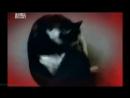 Адская кошка 07 Обозлённая Реальное ТВ животные фелинология 2011