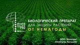 Нематофагин- Микопро естественная защита от НЕМАТОДЫ