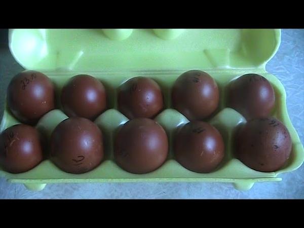 Яйцо моих Ч.М маранов Я довольна Принимаю заказыСекреты хороших рожаев.