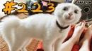 КОТЫ 2019 Смешные кошки приколы с кошками и котами до слез – смешные коты – Funny Cats