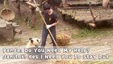 Panda: Do You Need My Help? Janitor: Yes I Need You To Stay Put | iPanda